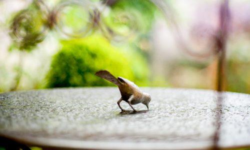 Oiseau sur une table après la pluie.