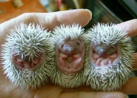 Astuces jardin - Le hérisson sort de son hibernation - Les doigts Fleuris
