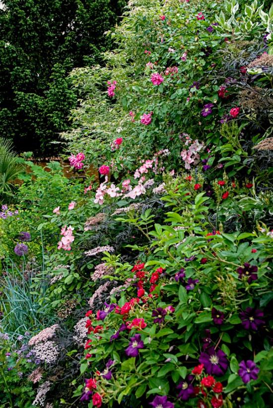 Langage fleuri argotique - plantes et séxualité - Les Doigts Fleuris