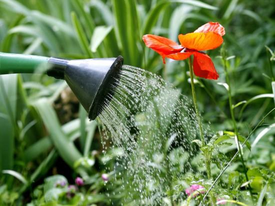 Des brèves de jardins: astuces de jardiniers - Les Doigts Fleuris