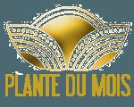 PLANTE-DU-MOIS-LES-DOIGTS-FLEURIS