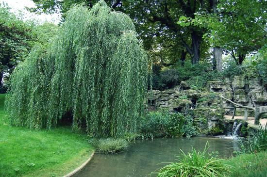 Astuces jardin - Hormone de bouturage naturelle, l'eau de saule - Les Doigts Fleuris