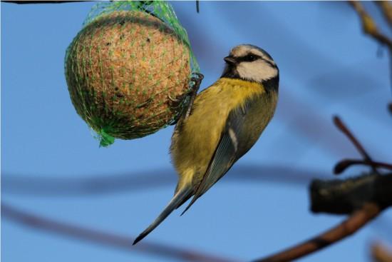 Astuce Jardin En Hiver - Nourrir Les Oiseaux - Les Doigts Fleuris