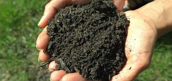 Comment Nourrir Le Sol De Votre Jardin Naturellement ? Le Compost !