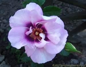 Rose Eyes For You - Les Doigts Fleuris