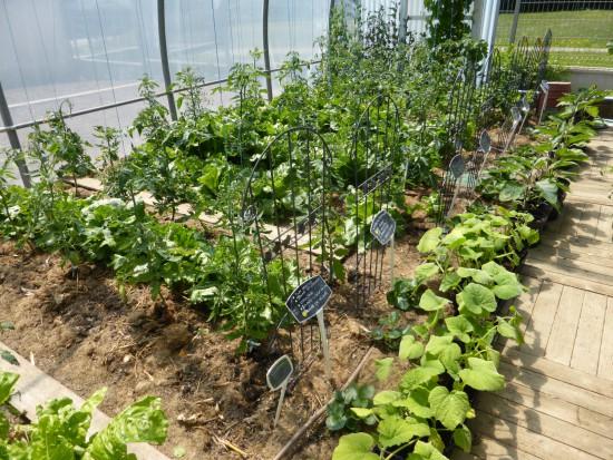 Faire son potager - à planter au mois de mars - Les Doigts Fleuris