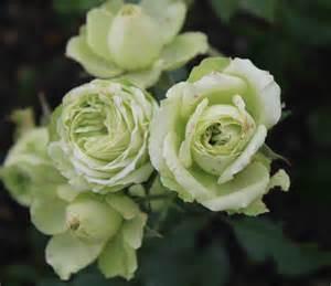 Carnet de tendance - roses  lovely green - Les Doigts Fleuris
