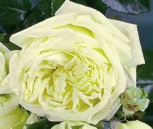 Carnet de tendance - roses  elfe - Les Doigts Fleuris