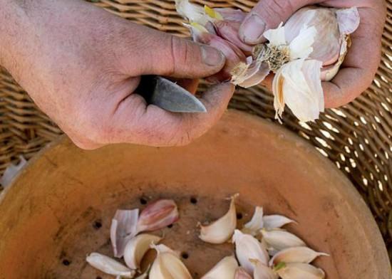 Traitement naturel des plantes - recette de pascal clerc - ail laurier purin - Les Doigts Fleuris