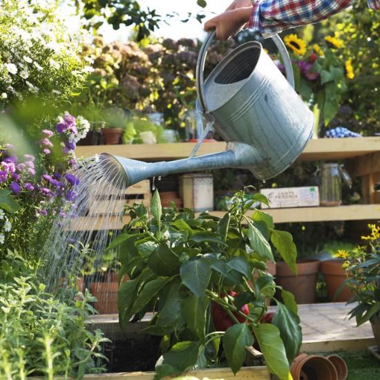 Traitement Naturel Et Astuce Pour Votre Jardin