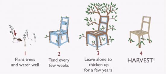 Il cultive et produit des chaises ! Oui, vous avez bien lu ! - blog jardin