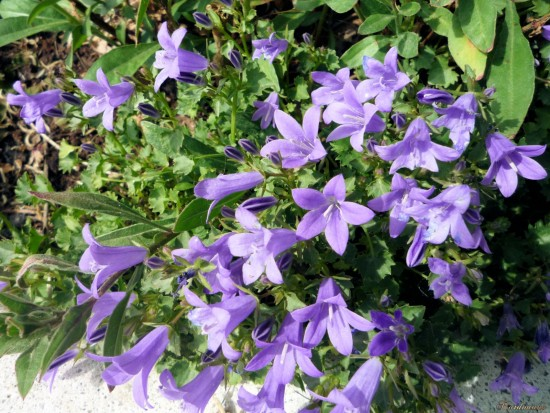 L'intelligence verte - Les Doigts Fleuris