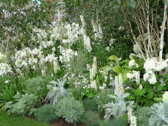La couleur au jardin, attention aux associations - blog jardin