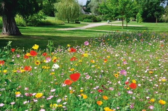 Les Pucerons: La Prairie Fleurie Comme Alternative
