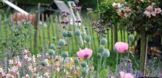 Brèves de jardin - Les Doigts Fleuris