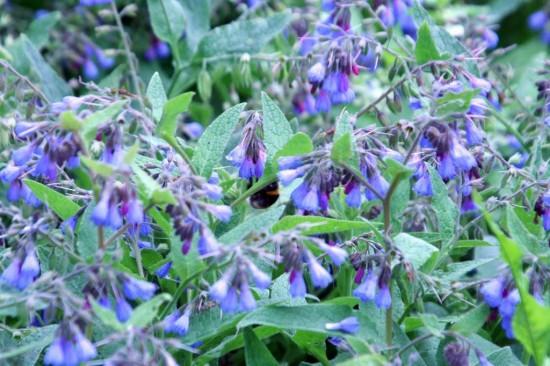 La Consoude - Les Doigts Fleuris