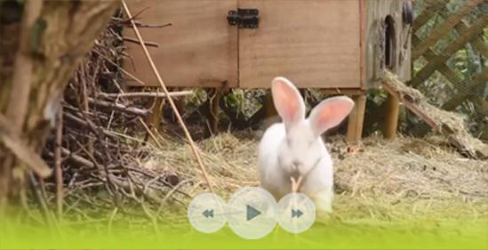 Bobby de la Biscotte, mon lapin géant des Flandres, vous invite à faire un petit tour chez lui ! - Les Doigts Fleuris