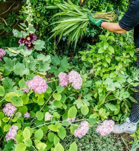 Entretenir Son Jardin, Les Gestes Et Astuces Simples !