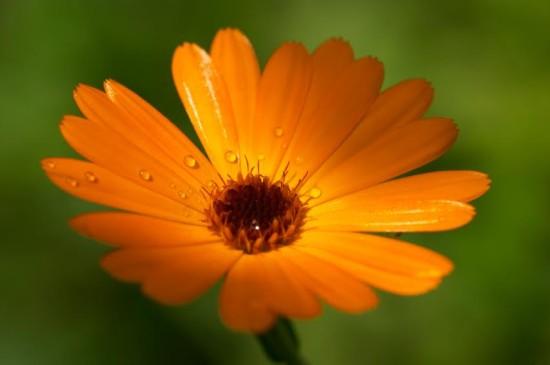 Le Souci - Les Doigts Fleuris