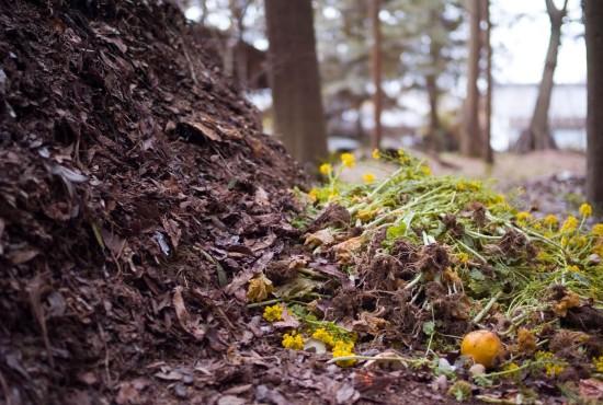 Le compost a soif - Les Doigts Fleuris