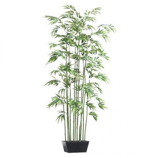 Le bambou - ces plantes qui diffusent de l'énergie positive - Les Doigts Fleuris