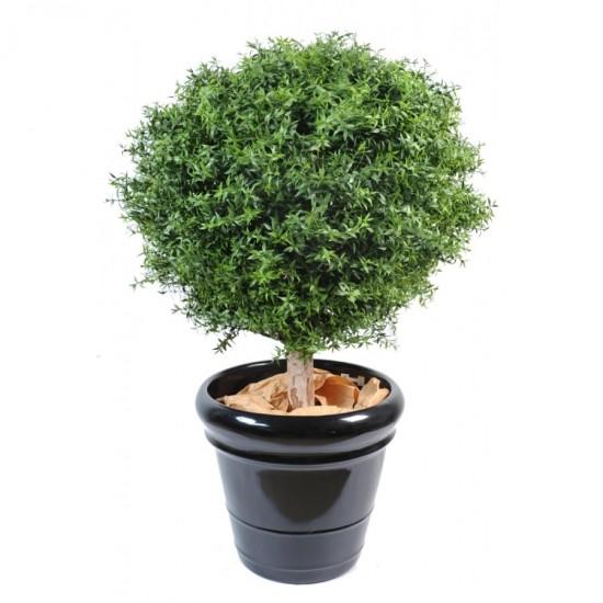 L'eucalyptus - ces plantes qui diffusent de l'énergie positive - Les Doigts Fleuris