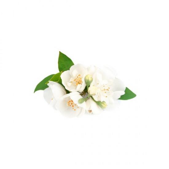 Le jasmin - ces plantes qui diffusent de l'énergie positive - Les Doigts Fleuris