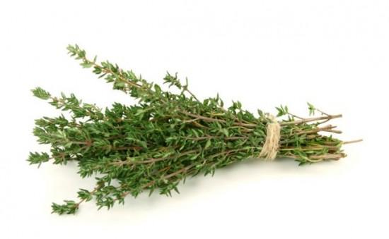 Le thym - ces plantes qui diffusent de l'énergie positive - Les Doigts Fleuris