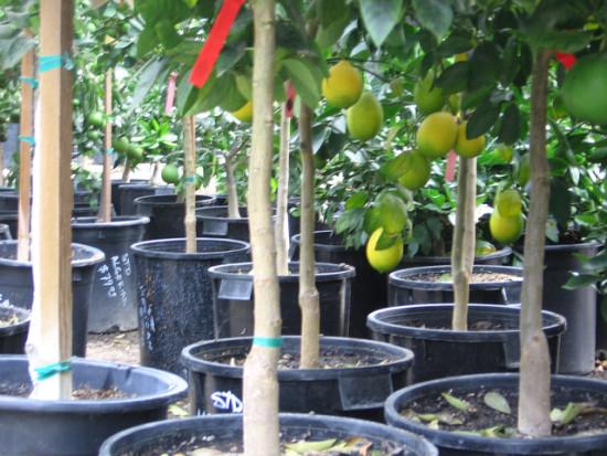 Les Arbres Fruitiers, Où Les Acheter Sans Se Tromper ?