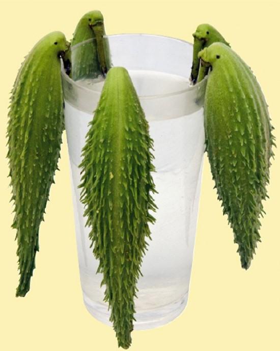 Asclepias, soie d'Amérique ou le soyer du québec - Les Doigts Fleuris