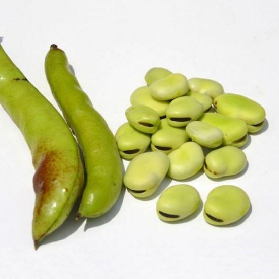 Dans votre potager, plantez des fèves - blog jardin