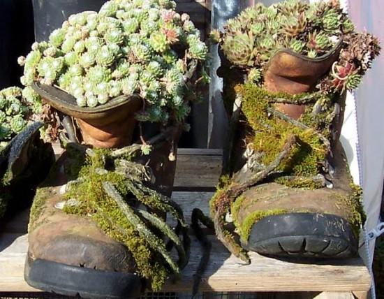Les Joubarbes, Des Plantes Pour Toutes Les Situations