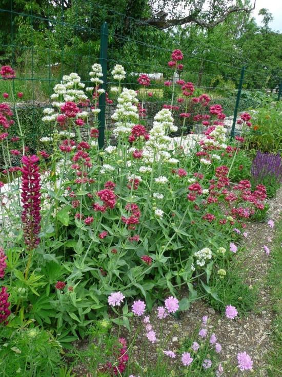 plantes vagabondes - Les Doigts Fleuris