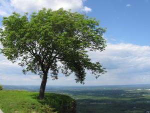 Ces arbres qui nous font du bien - le frêne - Les Doigts Fleuris