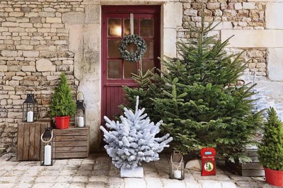 L'épicéa Ou Arbre De Noël, Pour Ou Contre Sa Culture ?