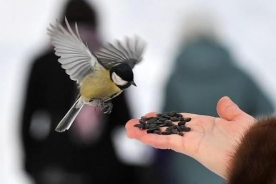 Les Oiseaux : Nourrissez-les Au Jardin En Hiver !