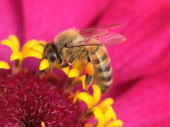 La Pollinisation: L'ingéniosité Des Plantes Pour Se Faire Féconder