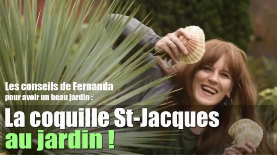 Coquille Saint-Jacques, Les Bénéfices Au Jardin.