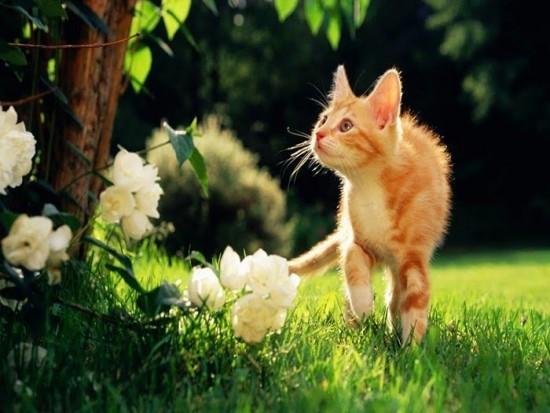 Le Chat: Le Danger Et Les Bienfaits Des Plantes !