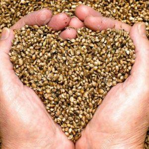Test de la germination des graines - Les Doigts Fleuris