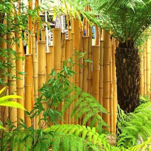 barrière en bambou - bambouland - Les Doigts Fleuris