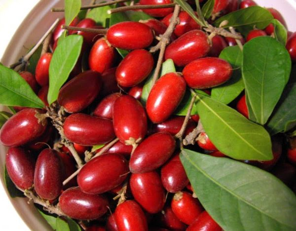 Le Petit Fruit Miracle Qui Change Le Goût Aigre En Goût Sucré !
