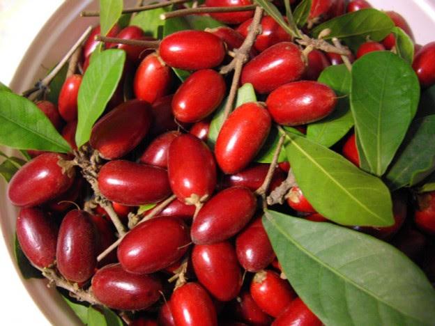 Le petit fruit miracle, appelé Synsepalum Dulcificum - blog jardin