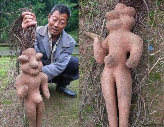 plante médicinale FALLOPIA MULTIFLORA ou renouée à fleurs multiples - racine à forme humaine - blog jardin