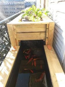 le bassin potager au balcon