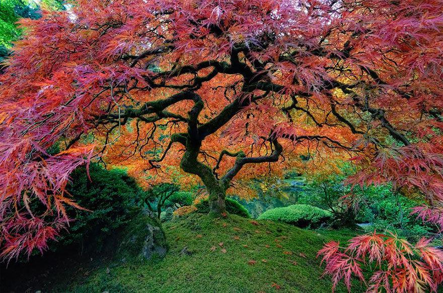 les arbres et la symbolique