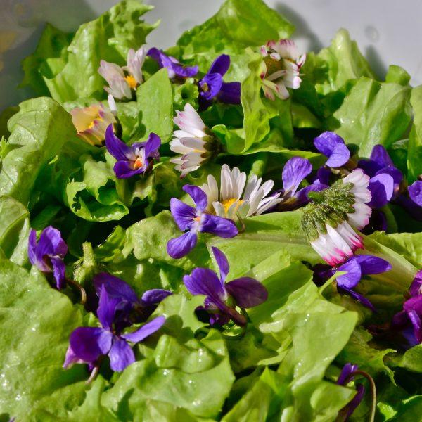 Salade De Mesclun Sauvage De Printemps