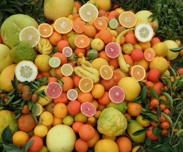 Les Agrumes Rustiques, Un Jardin Vitaminé